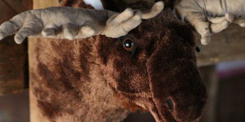 old moose