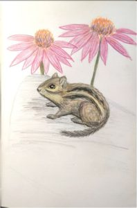 Eastern chipmunk and echinacea flowers