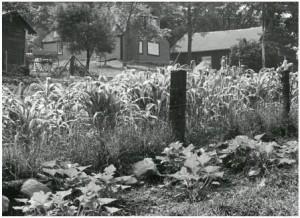 garden-in-the-70s