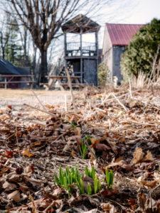 spring March 2020 gazebo garden