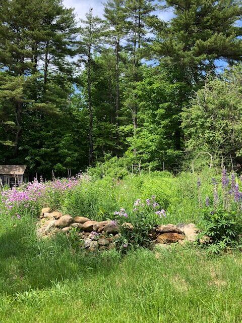The Former Vegetable Garden Is Now A Wild Flower Garden