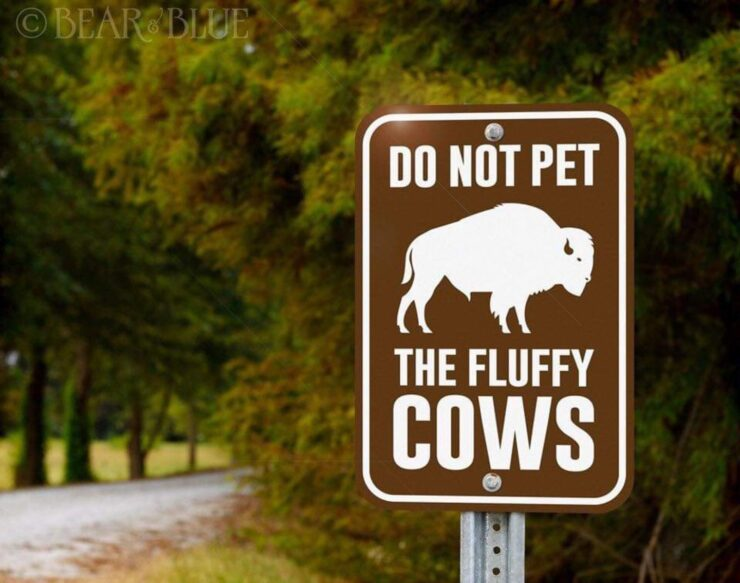 Do not pet the fluffy cows